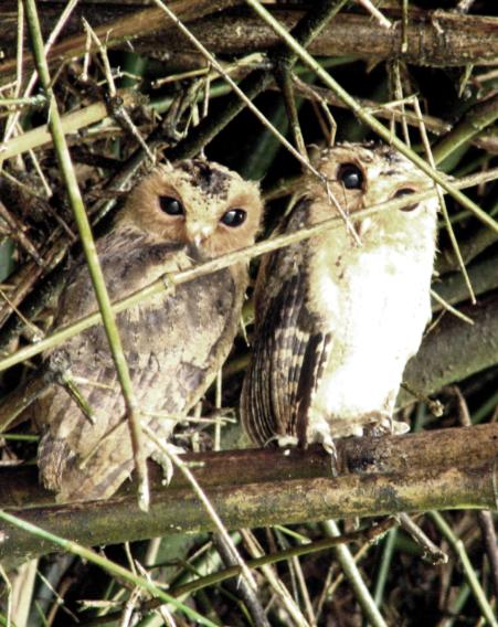 two-chicks.jpg